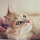Vinn en årsförbrukning av kattmat