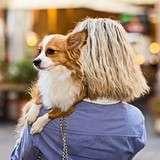 Vinn en hotellhelg för dig och din hund