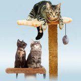 Vinn ett kattorn