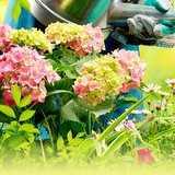 Vinn nya blommor och plantor